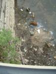 bassin Peel